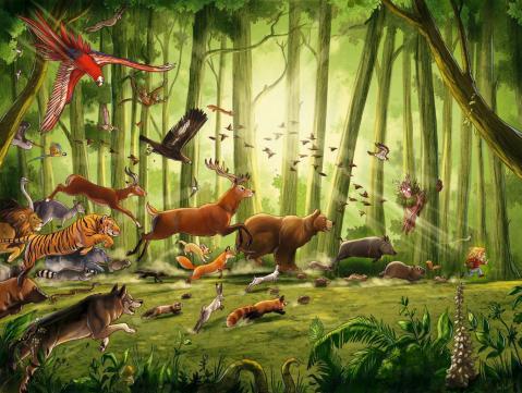 Animal jack faune