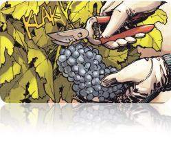 Bodegas ruizge 1 coupe du raisin